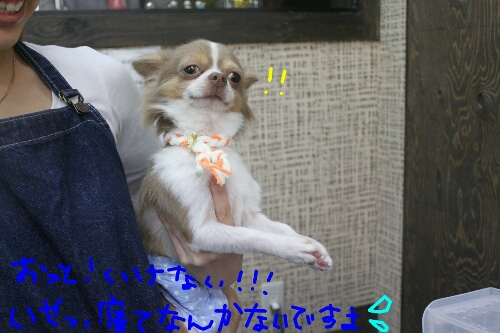 b0130018_1622527.jpg