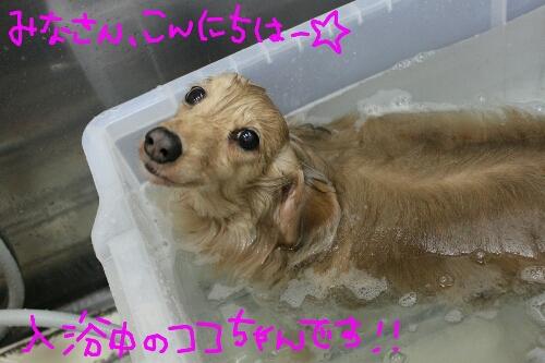 b0130018_16352724.jpg
