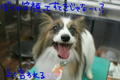 b0130018_1645305.jpg