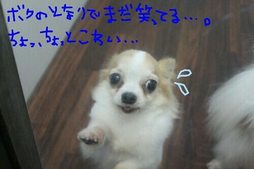 b0130018_16454580.jpg