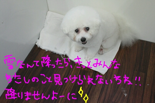 b0130018_1912258.jpg