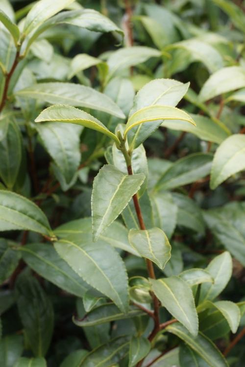 茶LON (19)_b0220318_17143129.jpg