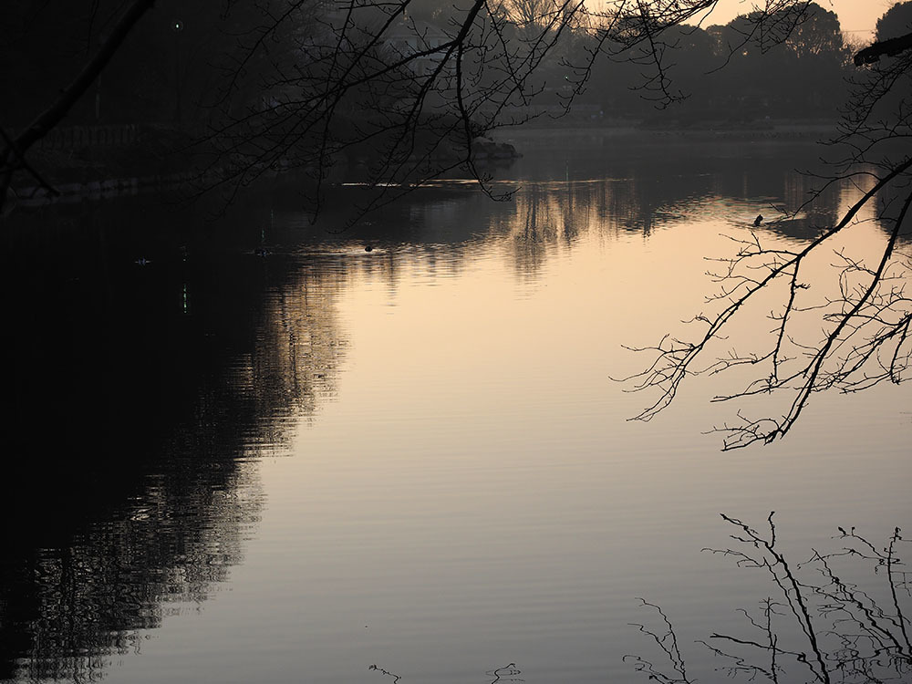 市川 いつもの池のカワセミやその他水鳥たち そして春に向けてチョウの撮影_f0324026_18554853.jpg
