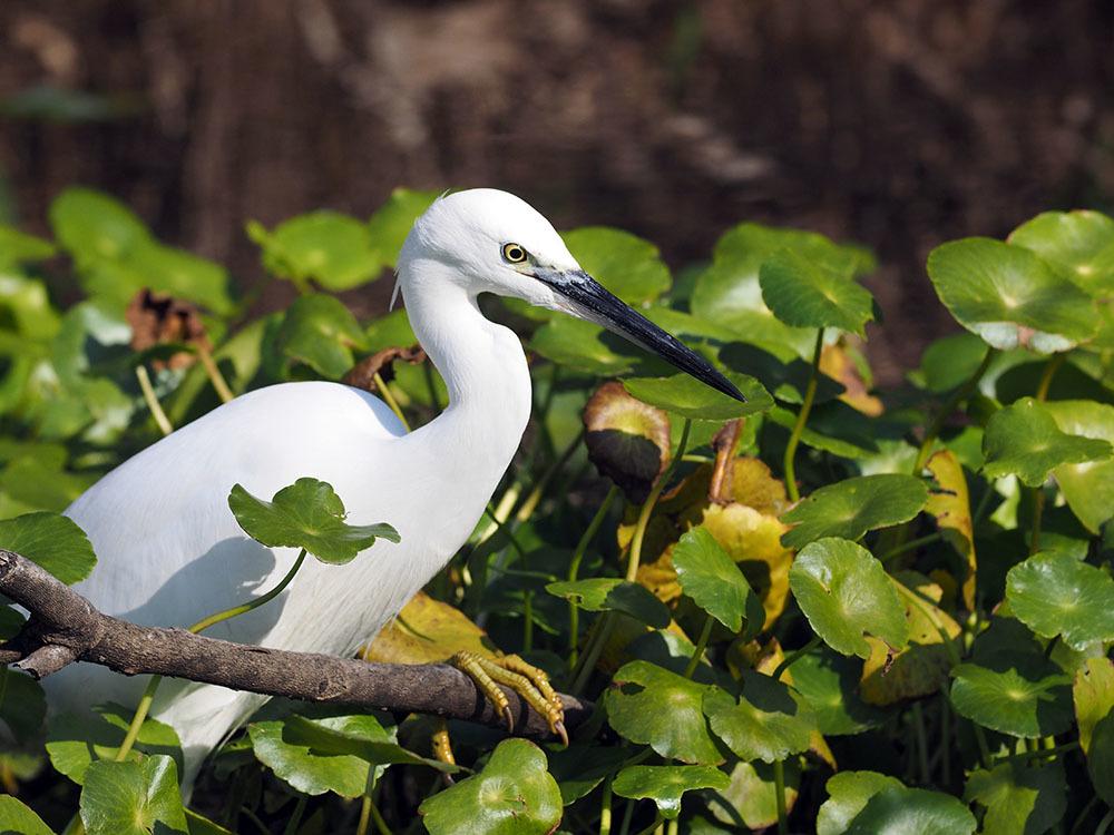 市川 いつもの池のカワセミやその他水鳥たち そして春に向けてチョウの撮影_f0324026_19173863.jpg