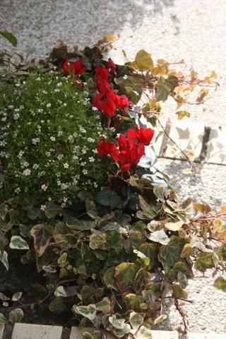 植物の身じろぎ_c0248269_11093369.jpg