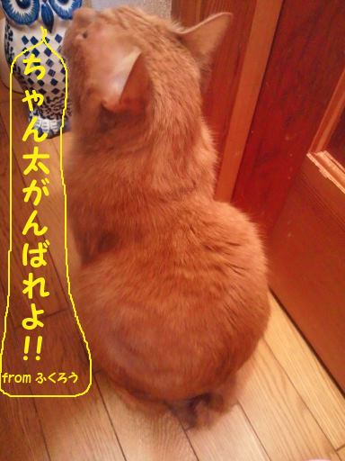 はじめまして!(ちゃん太)_f0242002_2213473.jpg