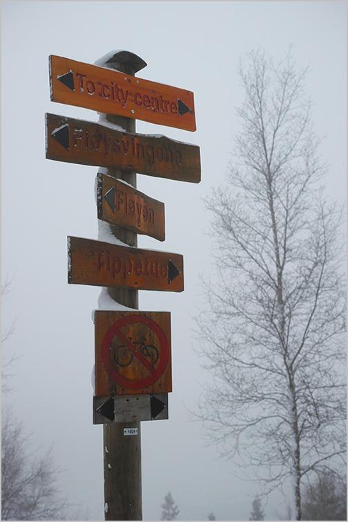 ノルウェーの森 Norwegian Wood #DP2 Quattro_c0065410_20562377.jpg