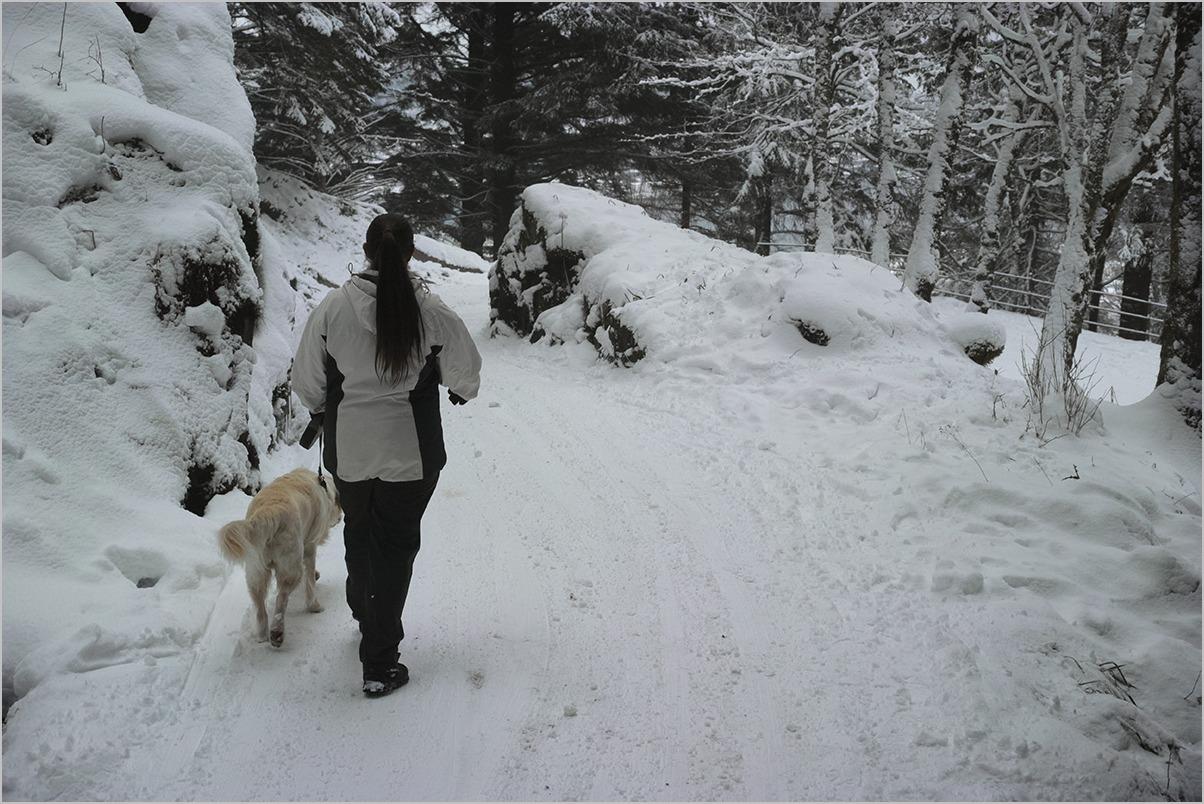 ノルウェーの森 Norwegian Wood #DP2 Quattro_c0065410_21124154.jpg