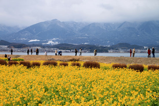 菜の花満開 第一なぎさ公園_e0048413_2012153.jpg