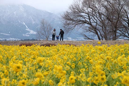菜の花満開 第一なぎさ公園_e0048413_2014559.jpg