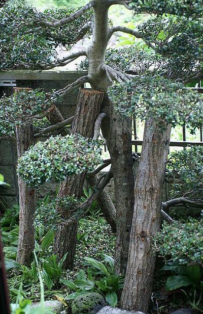 【椎茸の菌床栽培やってます/あき流の育て方レシピ><♪】Ww~@@!何処まで育つのかなぁヾ(^▽^)ノ_b0033423_16242997.jpg