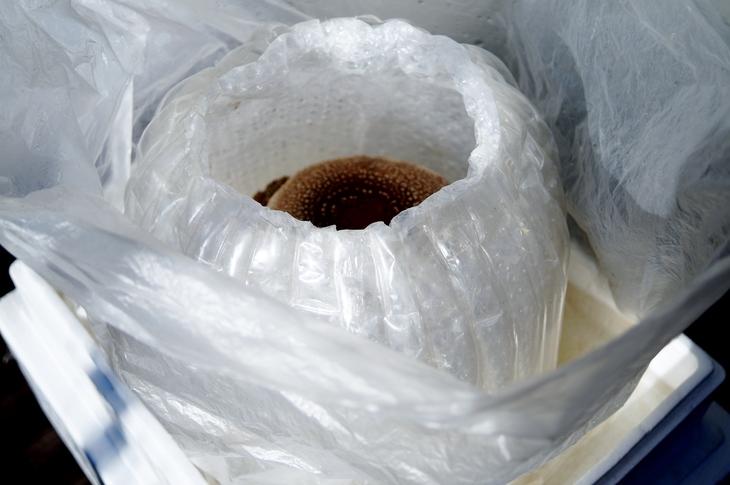 【椎茸の菌床栽培やってます/あき流の育て方レシピ><♪】Ww~@@!何処まで育つのかなぁヾ(^▽^)ノ_b0033423_17154516.jpg
