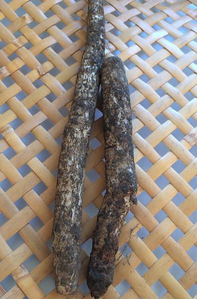 山ごぼう - モリアザミの根。。。クリアリング・フード_e0243332_22323011.png