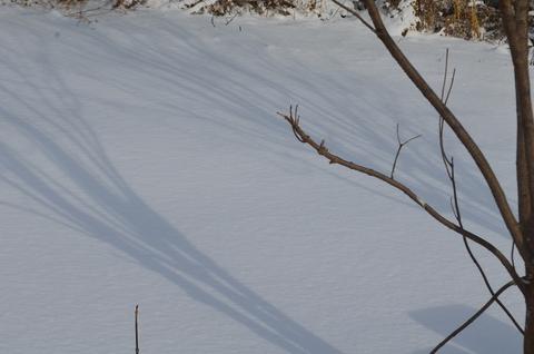 雪なのに、、、。_b0207642_13383534.jpg