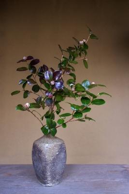花だより 照葉の椿_a0279848_1524191.jpg
