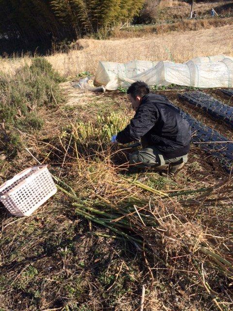 今朝は 大田君と飯田、赤坂さんの3名 フェンネルの刈り込みと葉物の収穫_c0222448_18341436.jpg