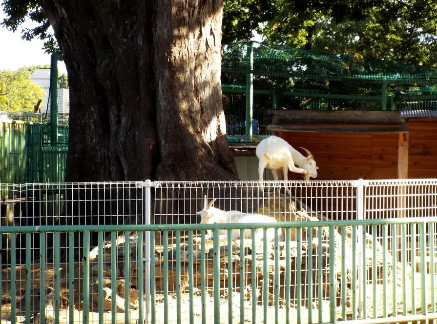 和歌山公園動物園_b0093754_18202172.jpg