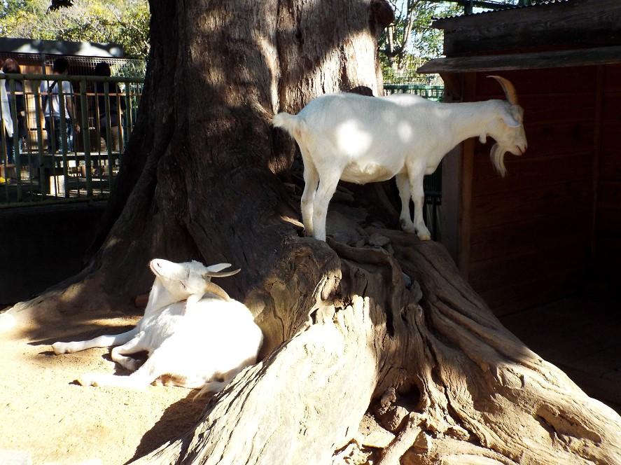 和歌山公園動物園_b0093754_18204541.jpg