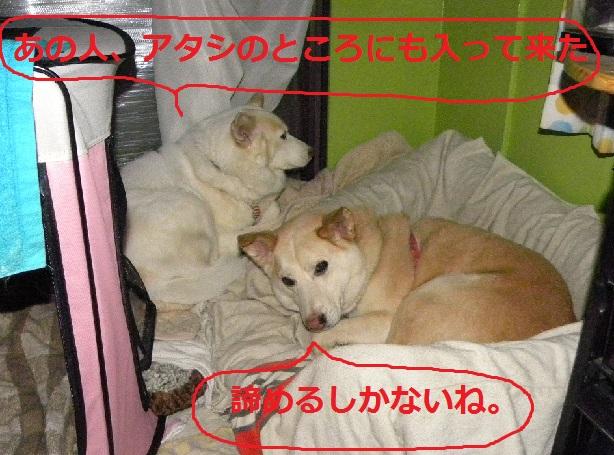 b0201756_20221119.jpg