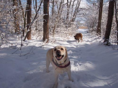 新雪を満喫した週末でしたぁ〜。_e0192217_911820.jpg