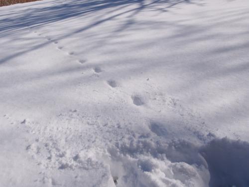 新雪を満喫した週末でしたぁ〜。_e0192217_918290.jpg