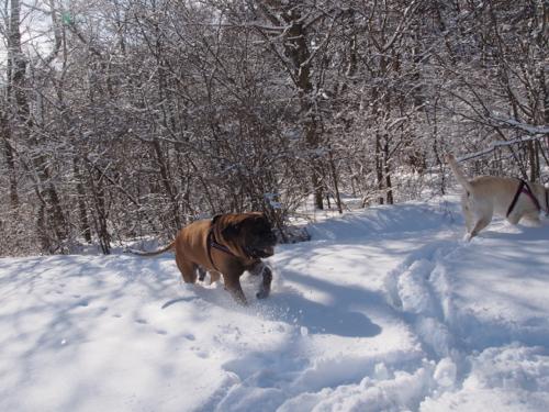 新雪を満喫した週末でしたぁ〜。_e0192217_9223546.jpg