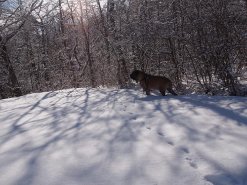 新雪を満喫した週末でしたぁ〜。_e0192217_922441.jpg