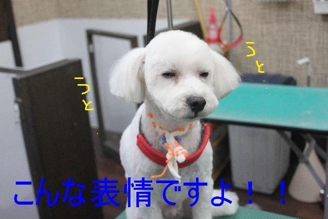 b0130018_112341.jpg