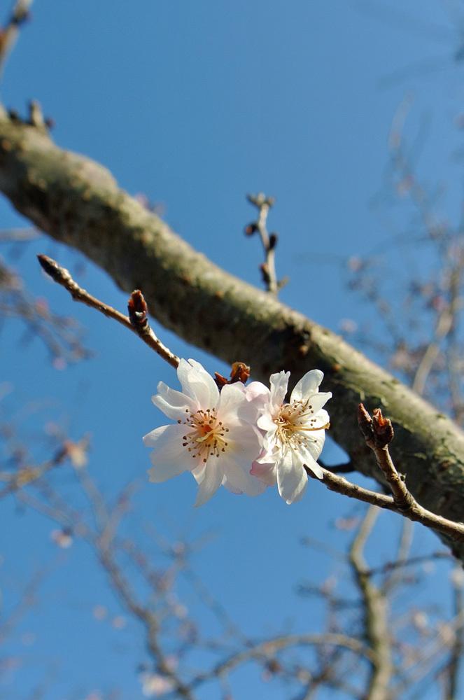 梅の季節を先取り_e0089232_15300584.jpg