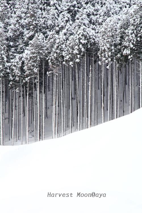 雪の整列_b0208495_23400081.jpg