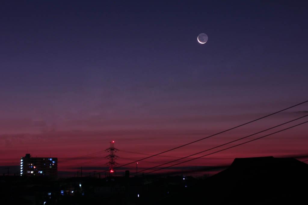 オオアカハラ/オオカワラヒワ/シロハラ/キジバト/カワセミ/アリスイ/ラブジョイ彗星/眉月_b0024798_951574.jpg