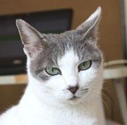 愛猫が子宮蓄膿症で手術_b0114798_1652399.jpg