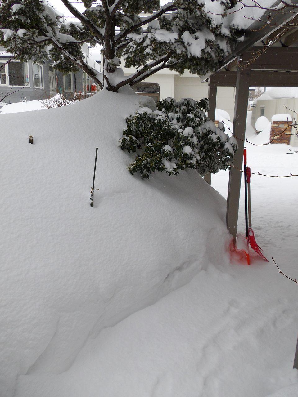 この冬、最悪の一日_c0025115_20211518.jpg