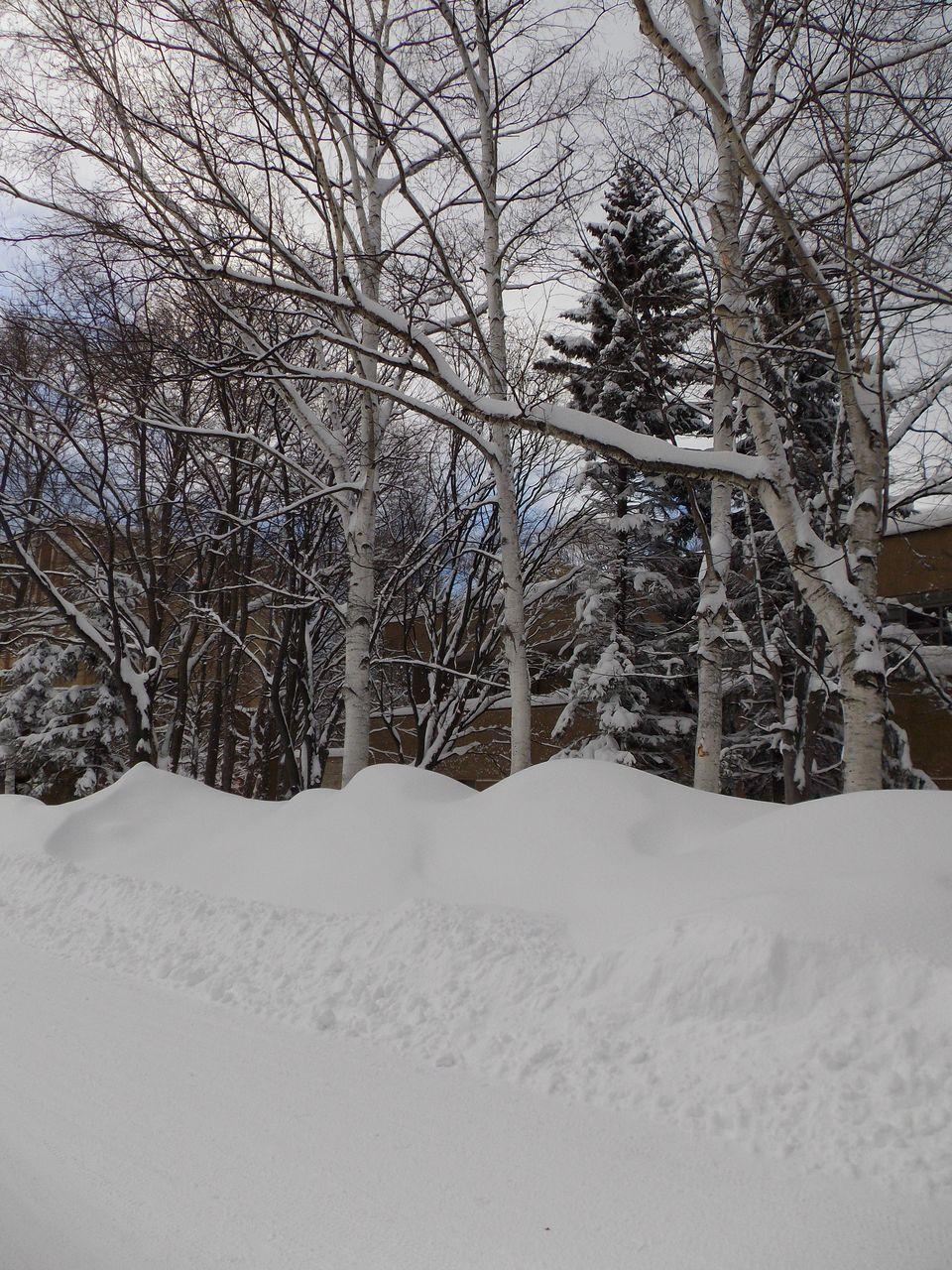 この冬、最悪の一日_c0025115_20254925.jpg