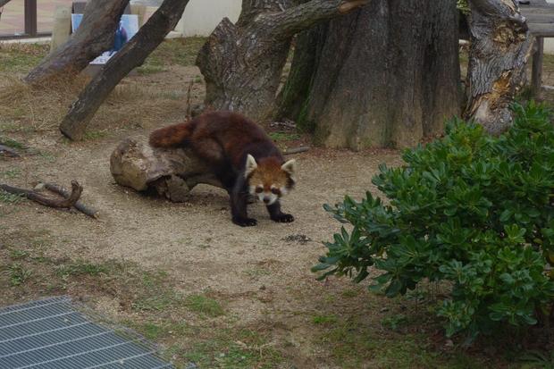 リニューアル途中★京都動物園_c0113733_1194638.jpg