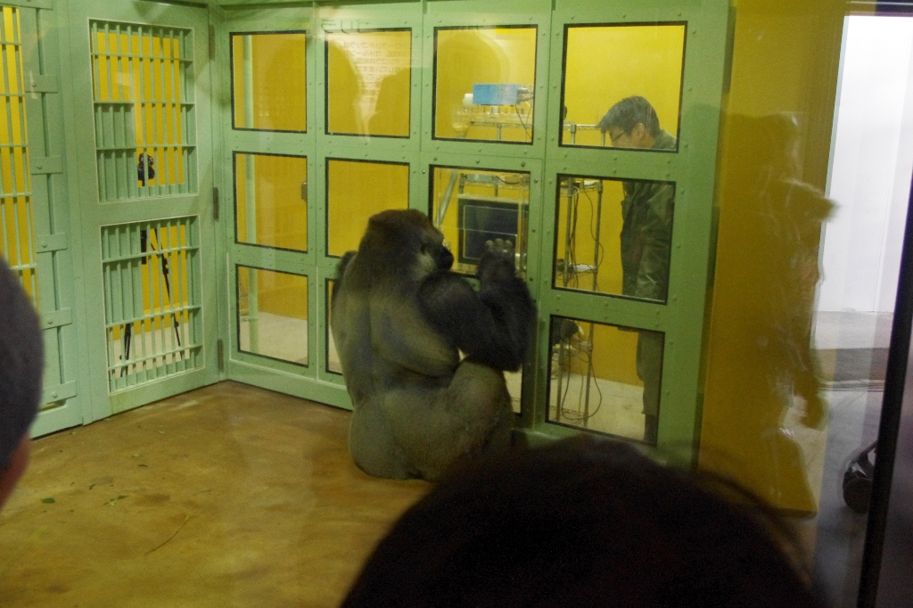 リニューアル途中★京都動物園_c0113733_1241650.jpg