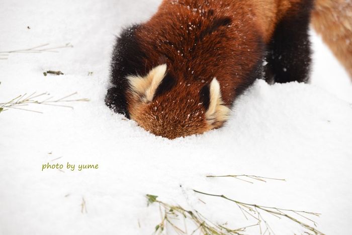play in the snow_a0322950_20181535.jpg