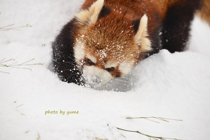 play in the snow_a0322950_20185720.jpg