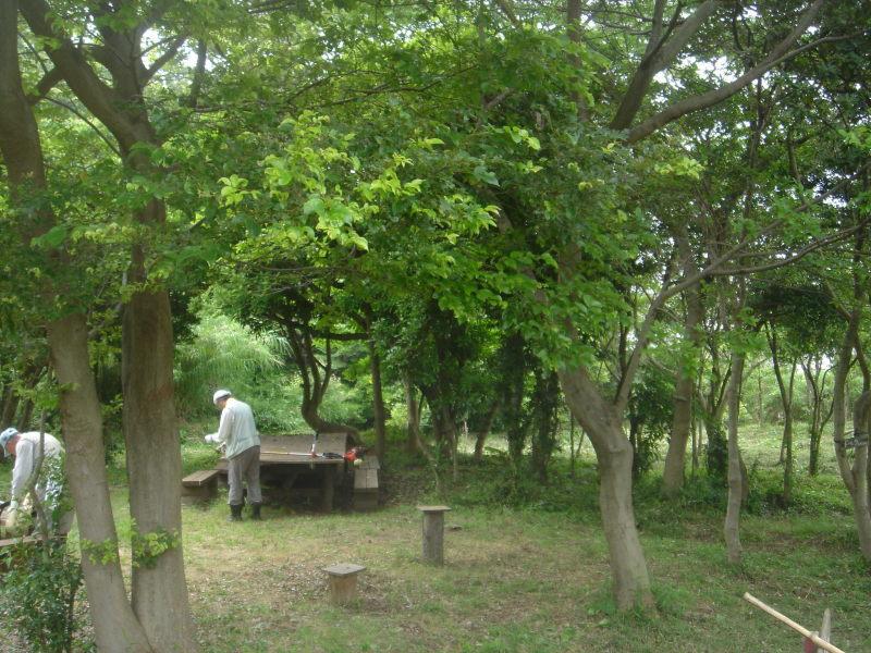 草刈り  in  うみべの森_c0108460_21250819.jpg