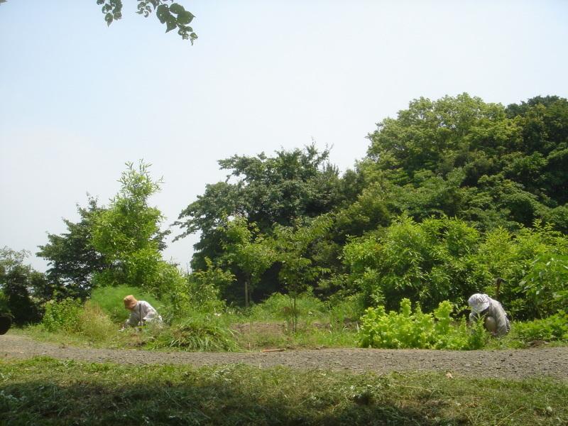 草刈り  in  うみべの森_c0108460_21251184.jpg