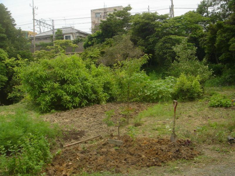 草刈り  in  うみべの森_c0108460_21305271.jpg