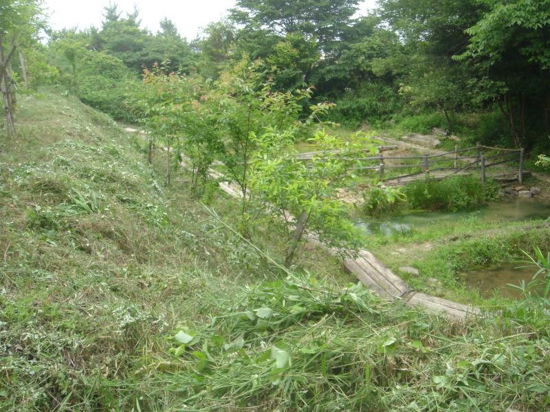 草刈り  in  うみべの森_c0108460_21305368.jpg