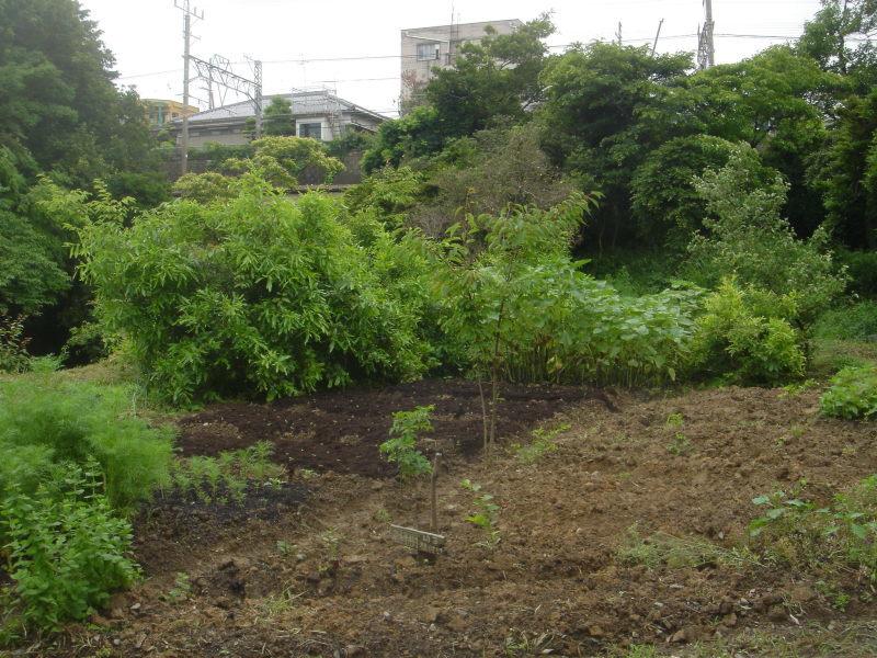 草刈り  in  うみべの森_c0108460_21305519.jpg