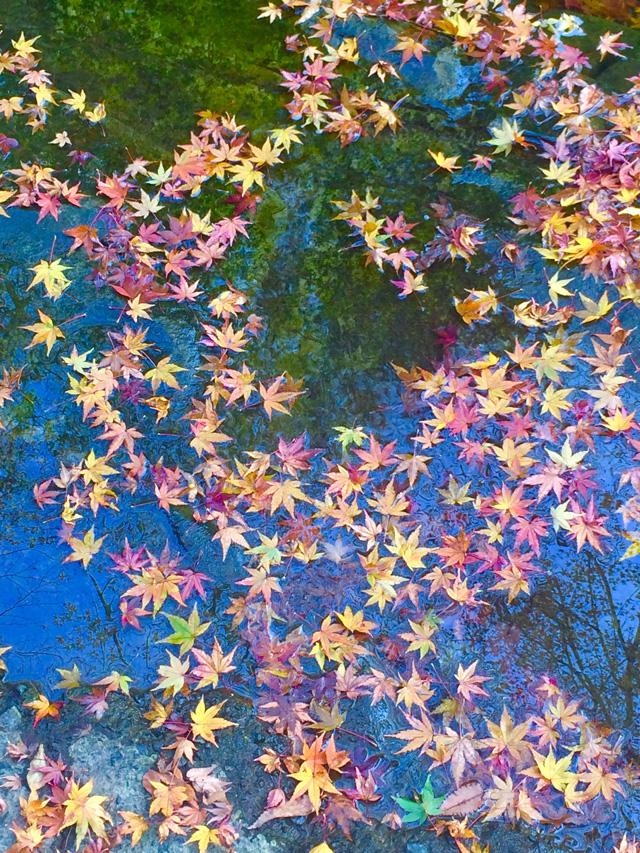 養老渓谷で紅葉狩り The Flavor of Autumn _e0168781_051111.jpg