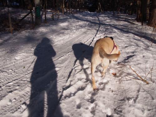 今日も雪の中で〜_e0192217_1311226.jpg