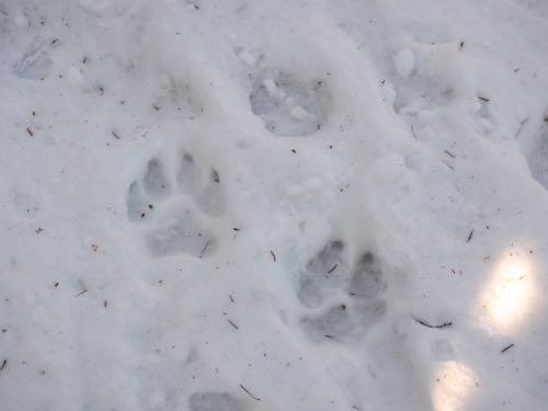 今日も雪の中で〜_e0192217_1312057.jpg