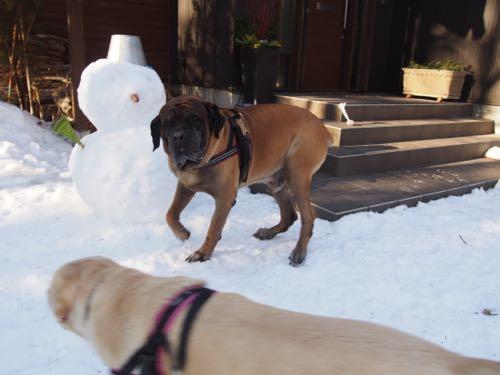 今日も雪の中で〜_e0192217_1381542.jpg
