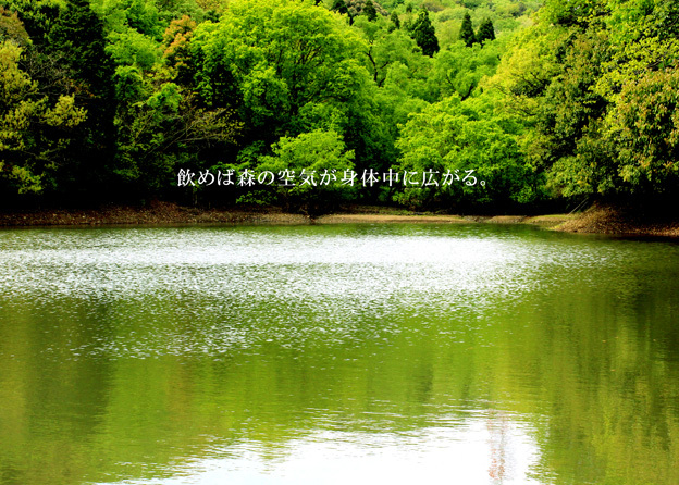 森林浴茶_a0329820_21560986.jpg