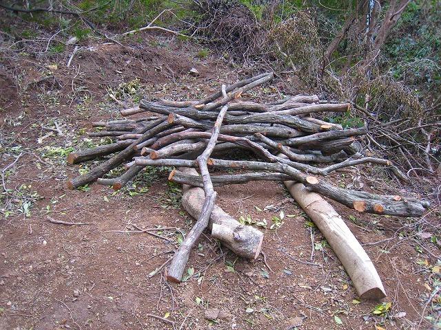 拡大する高知県西部の若手自伐型林業チーム_e0002820_22073591.jpg