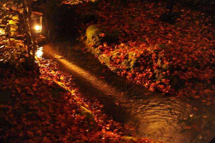京都 嵐山 宝厳院 夜景12_f0054539_2251636.jpg